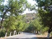 Greek landscapes pine tree road